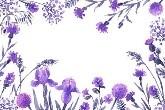 marco de flores lila