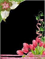 Flores fucsias y verde por doquier