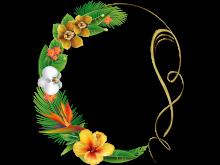 Fondo clásico para fotos con flores coloridas
